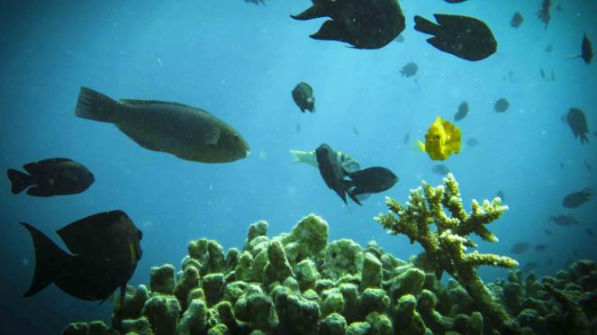 Keindahan Wisata Bawah Laut di Labuan Bajo