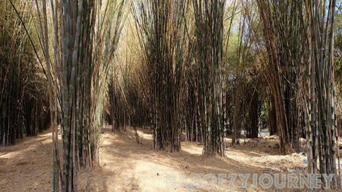Hutan Bambu, Keputih, Surabaya. Foto: Very barus.
