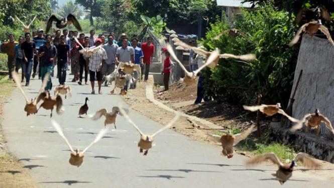 Pacu itiak atau balapan bebek terbang, permainan tradisional warga Kota Payakumbuh dan Kabupaten Limapuluh Kota di Sumatera Barat.