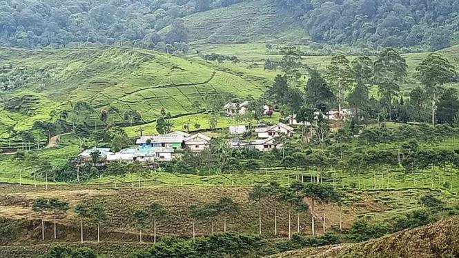 Hamparan kebun teh dan hutan Gunung Pangrango, Bogor