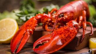 https://thumb.viva.co.id/media/frontend/thumbs3/2018/01/03/5a4c76ddb68fc-dampak-buruk-konsumsi-lobster-bagi-penderita-asam-urat_325_183.jpg