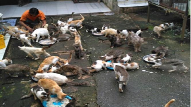 Rumah bagi hewan jalanan di Bojong Gede.