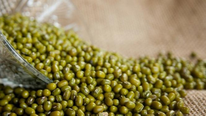 Kacang Hijau Untuk Obati Maag