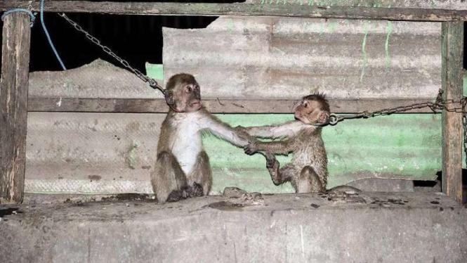 Foto monyet.