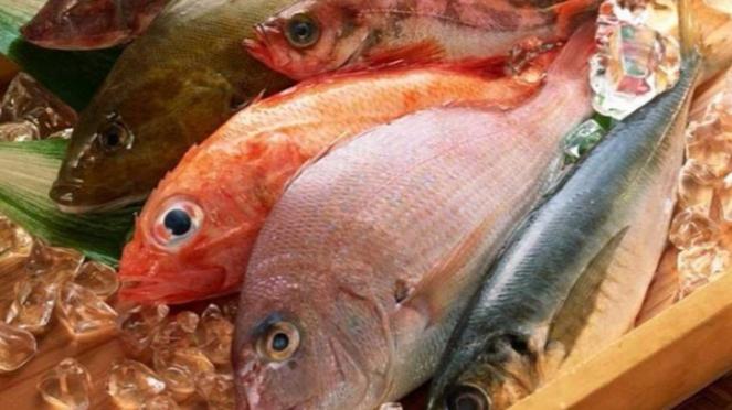 Ilustrasi ikan.