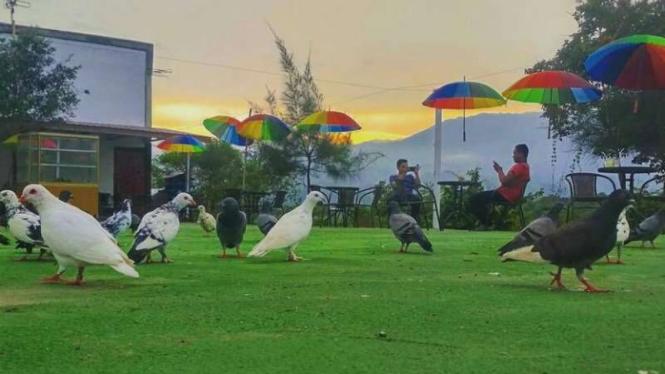 Download 48+ Foto Gambar Burung Merpati Besar  Terbaru Free