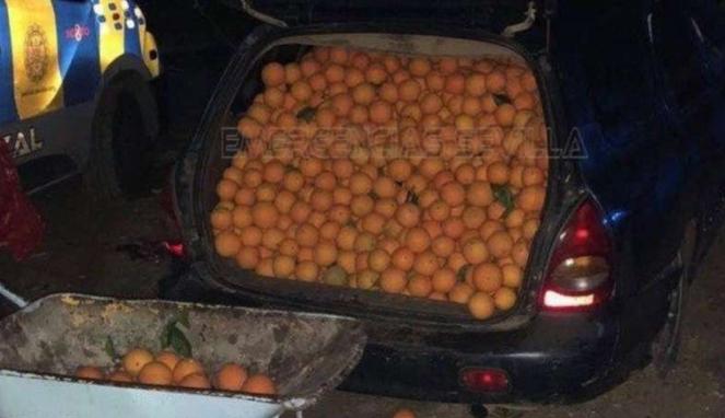 Mobil berisi jeruk curian.