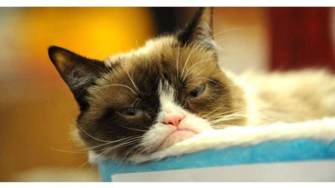 Tardar Sauce atau Grumpy Cat, si kucing judes yang menang gugatan pengadilan melawan perusahaan kopi di Amerika Serikat.