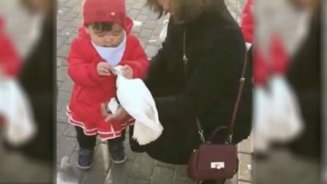Gadis kecil memberi makan burung.