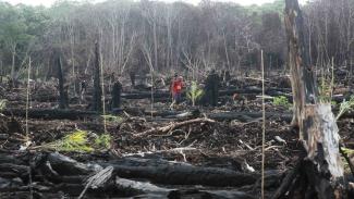 Pekerja menanam pohon kelapa sawit di kawasan Suaka Margasatwa Rawa Singkil
