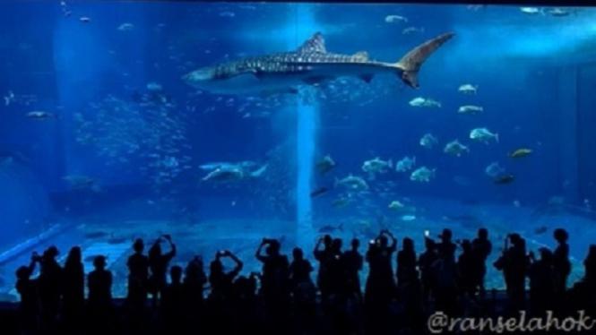 Okinawa Aquarium.