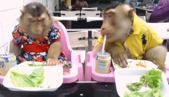 Sepasang monyet makan di restoran.