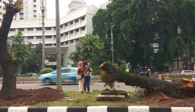 Pohon di depan Gedung Davinci ditebang, Kamis, 8 Maret 2018.