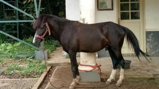Kuda dari NTT yang dilaporkan sebagai gratifikasi oleh Presiden Jokowi.