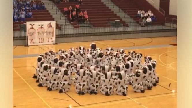 Puluhan balita menari menggunakan kostum sapi.