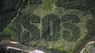 Lahan kelapa sawit bertuliskan SOS di Sumatera
