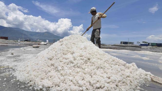 Petani memanen garam pada lahannya di Kawasan Penggaraman Talise, Kota Palu