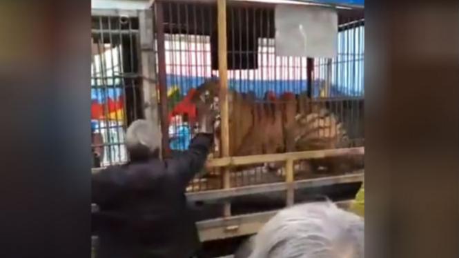 Tangan pria digigit harimau.