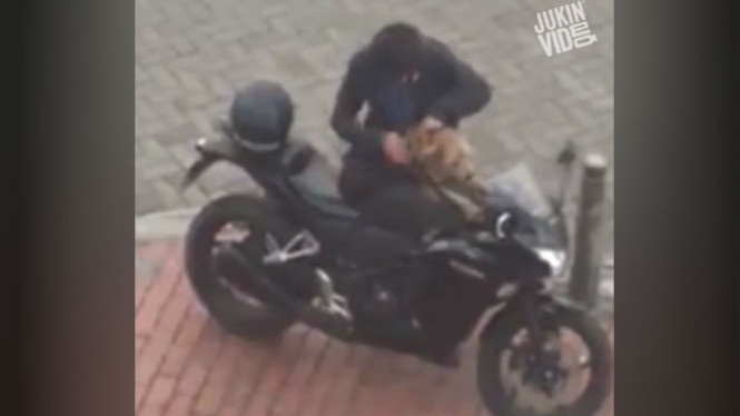Anjing didandani sebelum naik motor sport.