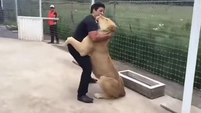 Singa berpelukan dengan pemiliknya.
