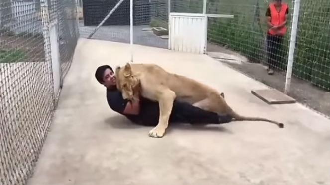Singa memeluk pemiliknya.