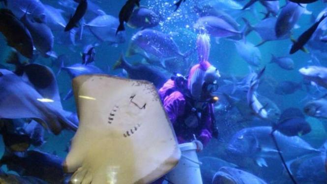 Suasana akuarium raksasa Sea World Ancol, Jakarta
