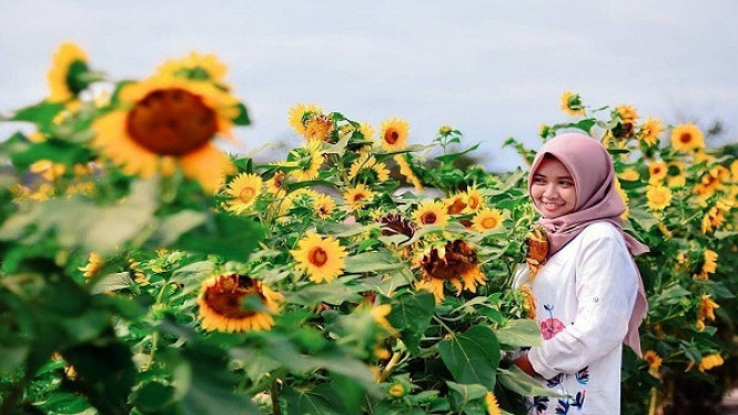Bunga Matahari.
