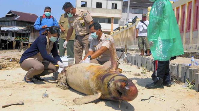 Hewan laut yang mati akibat minyak tumpah di Balikpapan