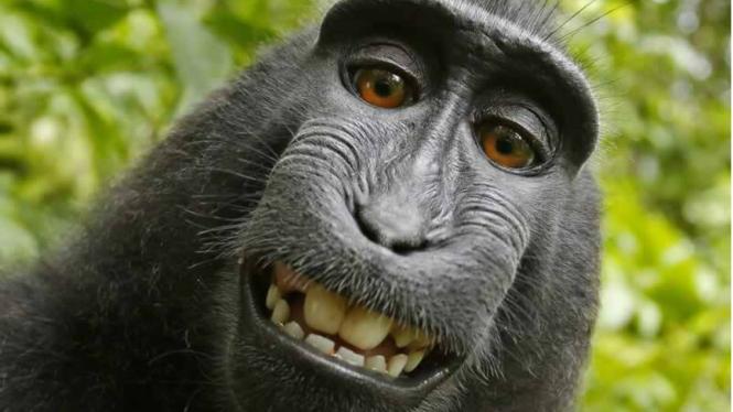 Selfie monyet Naruto