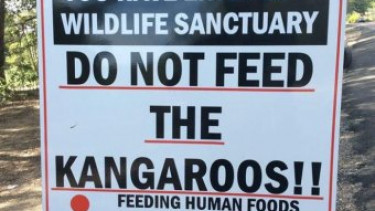 https://thumb.viva.co.id/media/frontend/thumbs3/2018/05/02/5ae94f0b37fd5-suka-diberi-wortel-banyak-kanguru-serang-turis_375_211.jpg