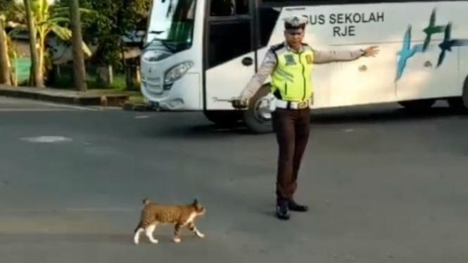 Polisi membantu kucing menyeberang.