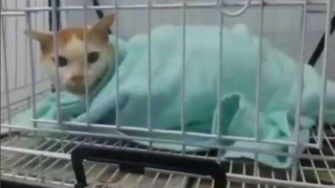 kucing malang yang dipotong kaki depannya Miris, Kaki Kucing Ini Dipotong Hanya Karena Mencuri Ikan