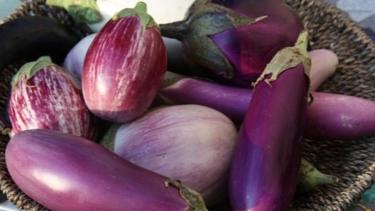 Penderita Asam Urat Bolehkah Makan Terong