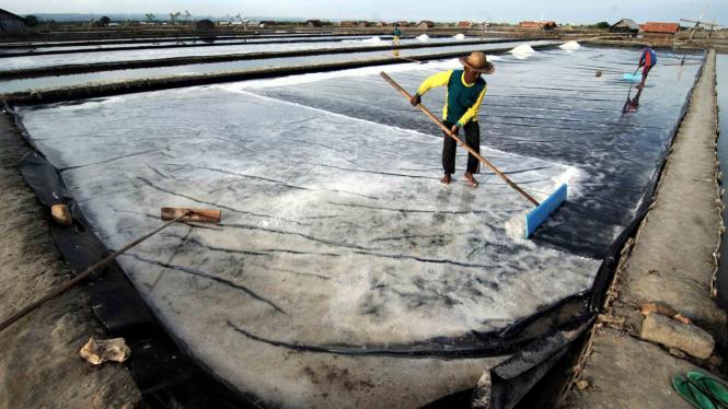 Petani memanen garam di Desa Bunder, Pamekasan, Jawa Timur