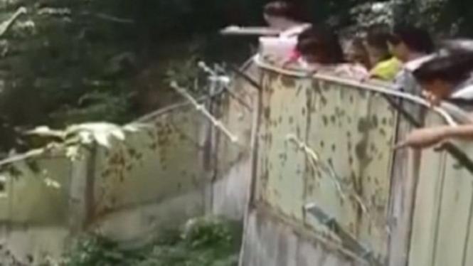 Pengunjung kebun binatang lempari panda.
