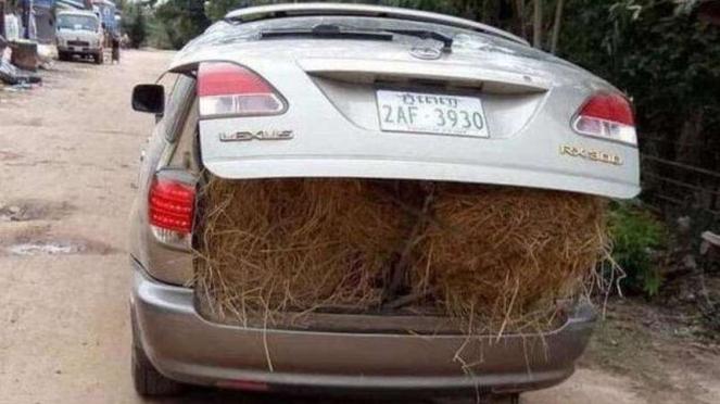 Petani bawa jerami dengan Lexus.