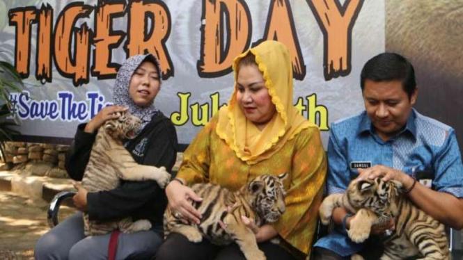 Anak harimau Benggala di Bonbin Mangkang, Semarang