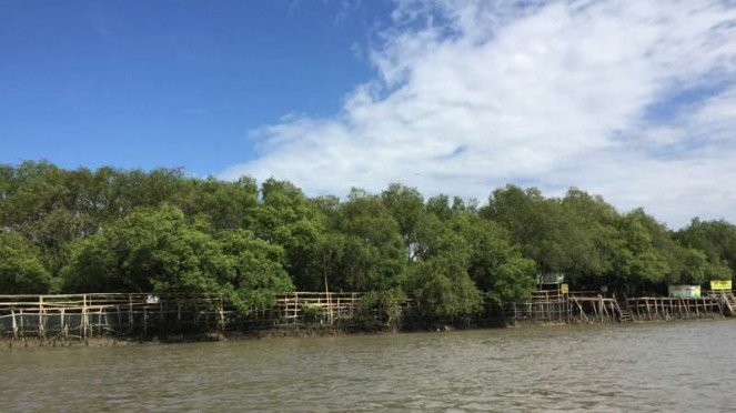Ekowisata Mangorove Wonorejo Rungkut Surabaya.