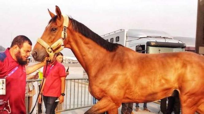 Sebanyak 33 kuda yang ikut dalam perhelatan Asian Games 2018