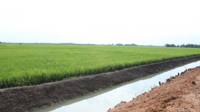 Ketersediaan stok beras nasional.