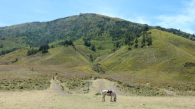Bukit Teletubies Gunung Bromo