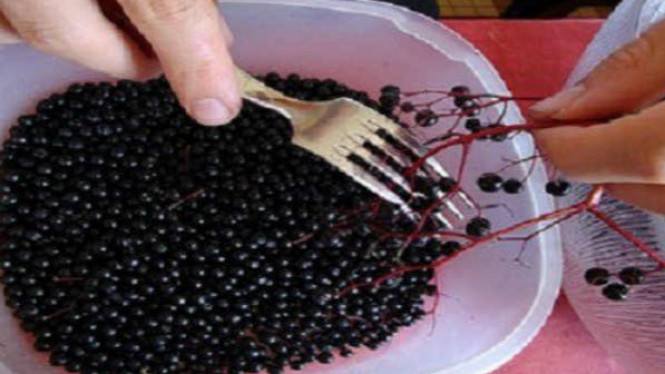 Buah elderberry.
