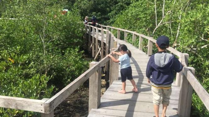 Ekowisata Hutan Mangrove di Pariaman