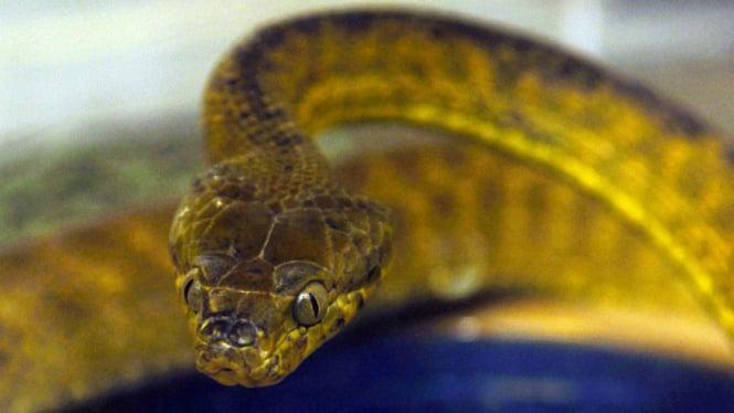 Ilustrasi ular.