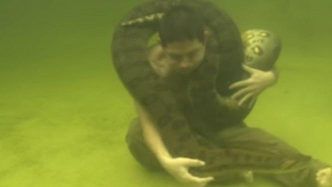 Berenang bersama ular besar anaconda.