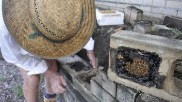 https://thumb.viva.co.id/media/frontend/thumbs3/2018/10/19/5bc958613ed07-petani-rambutan-di-australia-dongkrak-produksi-buah-pakai-lebah-tanpa-sengat_375_211.jpg