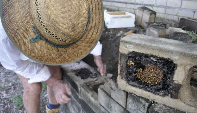 https://thumb.viva.co.id/media/frontend/thumbs3/2018/10/19/5bc958613ed07-petani-rambutan-di-australia-dongkrak-produksi-buah-pakai-lebah-tanpa-sengat_663_382.jpg