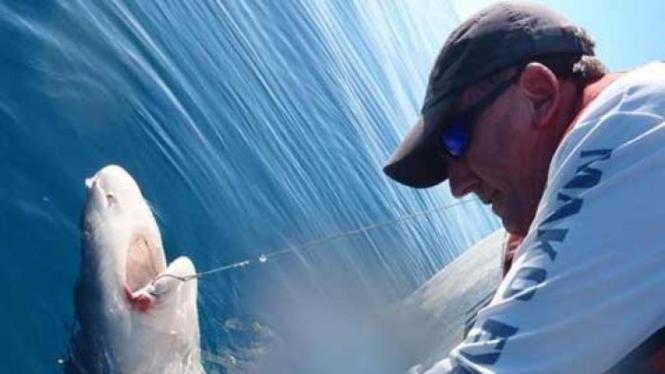 Marak Serangan Hiu Picu Desakan Pemusnahan Di Queensland Utara