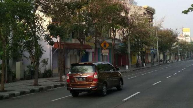 Tabebuya Pink Merekah di Kota Surabaya, Serasa di Jepangkah?