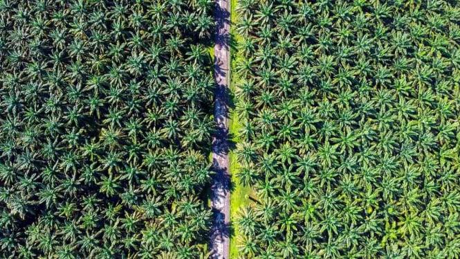 Kendaraan melintas di kawasan perkebunan kelapa sawit PTPN VI, Sariak, Pasaman Barat, Sumatra Barat